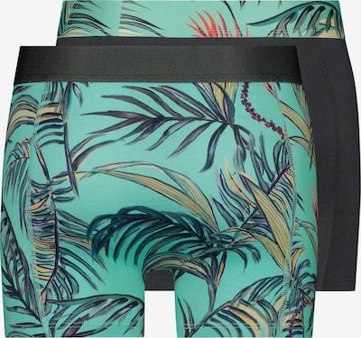Shiwi Bokserki 'Tropics' w kolorze aquam: Widok od tyłu