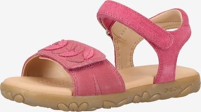 GEOX Sandalen in pink: Frontalansicht