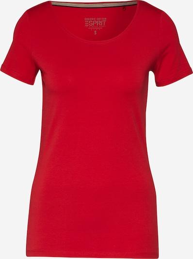 piros ESPRIT Póló 'CORE NOOS', Termék nézet