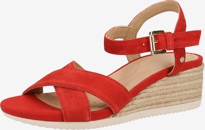 GEOX Sandalen met riem in de kleur Rood, Productweergave