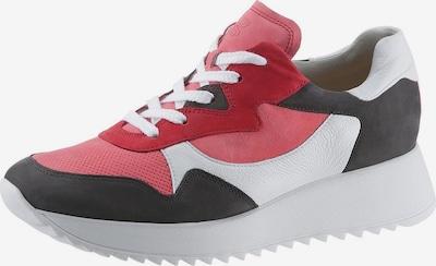 Paul Green Sneaker in koralle / schwarz / weiß, Produktansicht