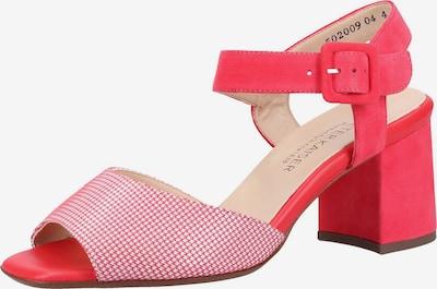 PETER KAISER Sandalette in pink / weiß, Produktansicht