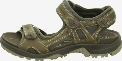 ECCO Sandalen in braun, Produktansicht