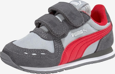 PUMA Sneaker in grau / rot: Frontalansicht
