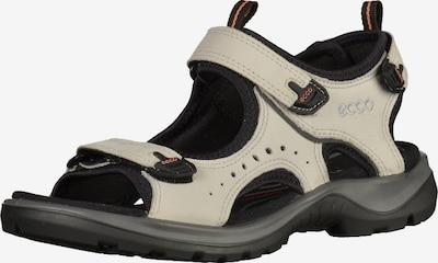 ECCO Sandalen in dunkelgrau / schwarz / weiß / perlweiß, Produktansicht