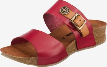 DR. BRINKMANN Mules in Red