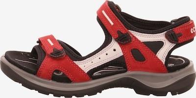 ECCO Sandalen in beige / rot / schwarz, Produktansicht