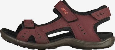 ECCO Sandalen in bordeaux / schwarz, Produktansicht