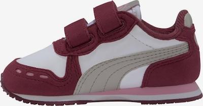 """PUMA Sneaker """"Cabana Racer SL"""" in grau / rosa / weinrot / weiß, Produktansicht"""