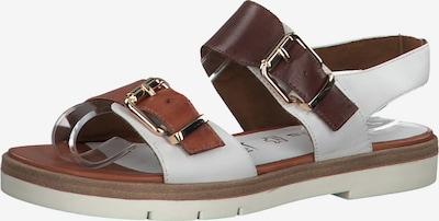 TAMARIS Sandale in braun / weiß, Produktansicht