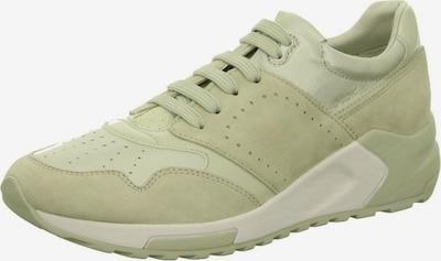 GEOX Schnürschuhe in grün, Produktansicht