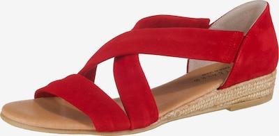 Paul Vesterbro Sandalen in rot, Produktansicht