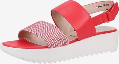 PETER KAISER Sandalen in altrosa / rot / weiß, Produktansicht