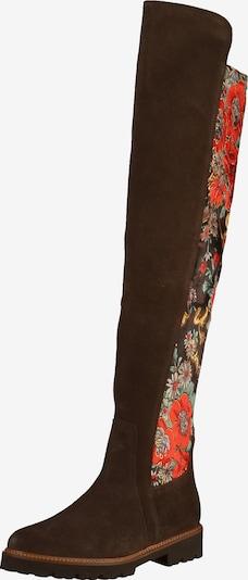 GABOR Overknee laarzen in de kleur Donkerbruin / Gemengde kleuren, Productweergave