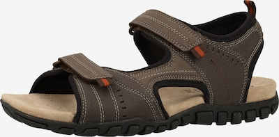 GEOX Sandale in braun, Produktansicht