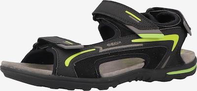 GEOX Sandalen in neongelb / anthrazit / hellgrau / schwarz, Produktansicht