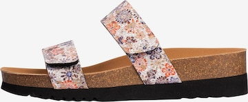 SCHOLL Mules 'GREENY 2 STRAPS 2.0' in Mixed colors