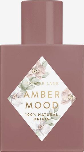 Juniper Lane Fragrance 'Art du Parfum 'Amber Mood' in Transparent, Item view