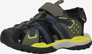 GEOX Sandale in Grün