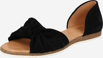 Apple of Eden Ballerina i svart