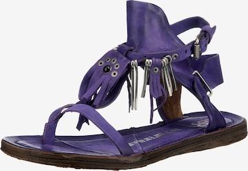 A.S.98 Sandale in Lila