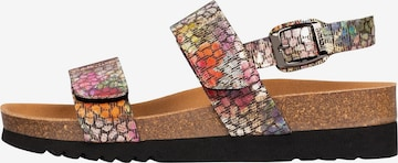 SCHOLL Sandals 'SANDAL 2.0' in Mixed colors