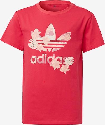 ADIDAS ORIGINALS T-Shirt in rosa / pitaya / puder / weiß, Produktansicht