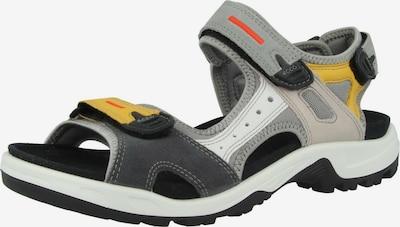 ECCO Sandalen in gelb / grau / schwarz / weiß, Produktansicht
