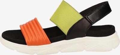 GABOR Sandalen met riem in de kleur Gemengde kleuren, Productweergave
