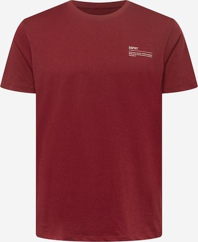 ESPRIT Shirt in rot / weiß, Produktansicht