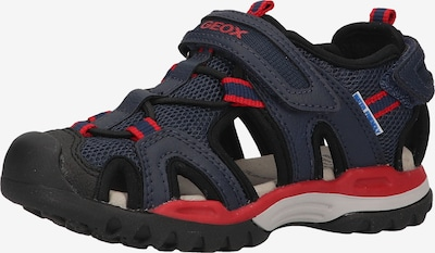 GEOX Sandals in marine blue / Red, Item view