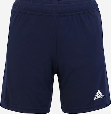ADIDAS PERFORMANCE Παντελόνι φόρμας 'Team 19' σε μπλε