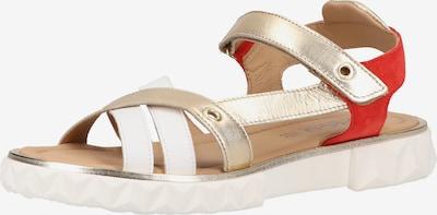 IGI&CO Sandale in mischfarben, Produktansicht