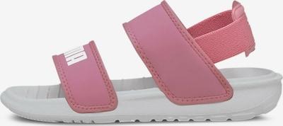 PUMA Sandale in pink / weiß, Produktansicht
