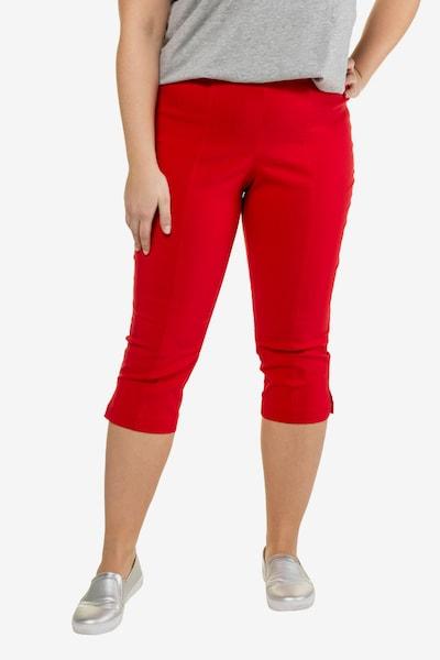 Ulla Popken Pantalon en rouge sang, Vue avec modèle