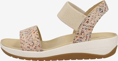 ARA Sandalen met riem in de kleur Gemengde kleuren, Productweergave