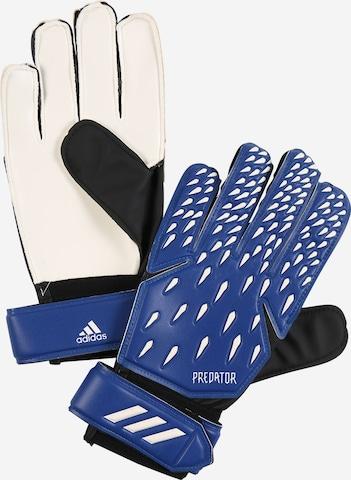 Gants de sport 'Predator' ADIDAS PERFORMANCE en bleu