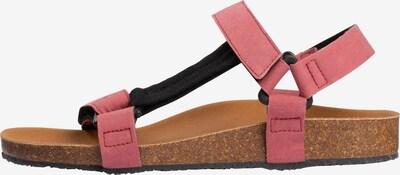 SCHOLL Sandale 'Greeny Heaven' in rosé / schwarz, Produktansicht