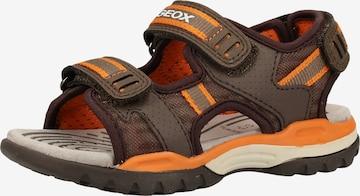 GEOX Sandale in Braun