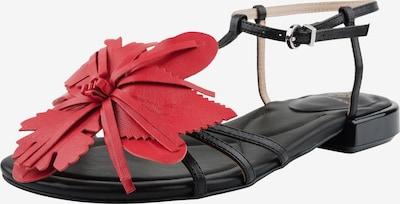 Ekonika Sandalen in rot / schwarz, Produktansicht