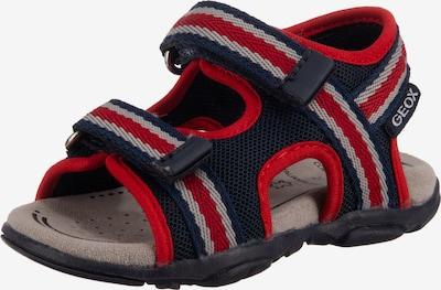 GEOX Sandale 'Agasim' in nachtblau / grau / rot, Produktansicht