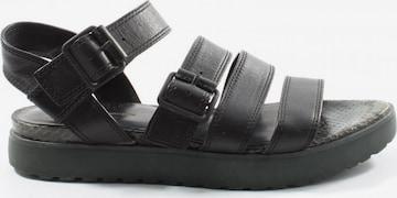Alexander Wang Sandals & High-Heeled Sandals in 36 in Black