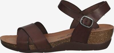COSMOS COMFORT Sandalen met riem in de kleur Bruin, Productweergave