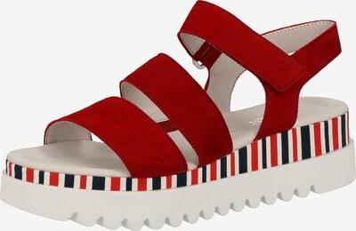 GABOR Sandalen met riem in de kleur Donkerblauw / Rood / Karmijnrood / Wit, Productweergave