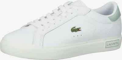 LACOSTE Sneaker in hellgrau / dunkelgrün / weiß, Produktansicht