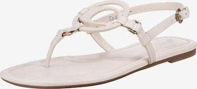 COACH Zehentrenner 'Jeri' in weiß, Produktansicht