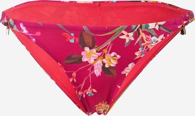 Banana Moon Bikinihose in goldgelb / tanne / grasgrün / fuchsia / rosa, Produktansicht