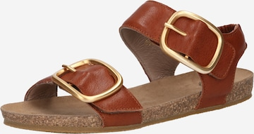 Ca'Shott Sandale in Braun
